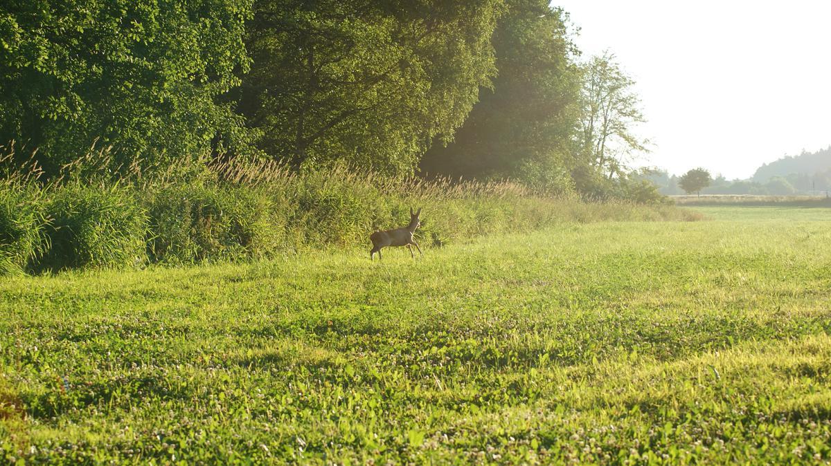 jelen u lesa
